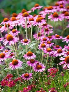 best 25 full sun plants ideas on pinterest full sun landscaping full sun flowers and