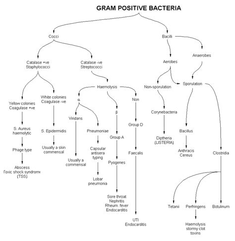 gram negative bacilli flowchart 1000 images about microbiology on animal cell