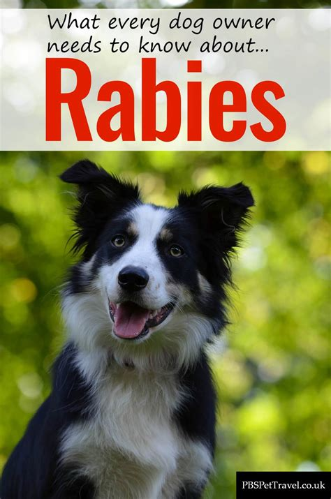 how are rabies for dogs rabies in dogs pbs pet travel