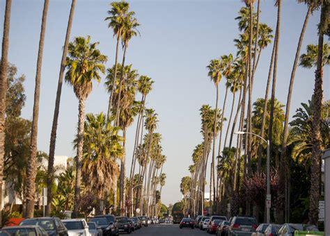 tree los angeles los angeles palm trees images