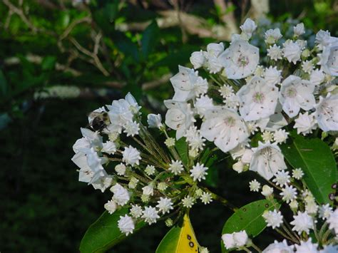 flowering shrub for shade flowering and nonflowering shrubs for shade enkivillage