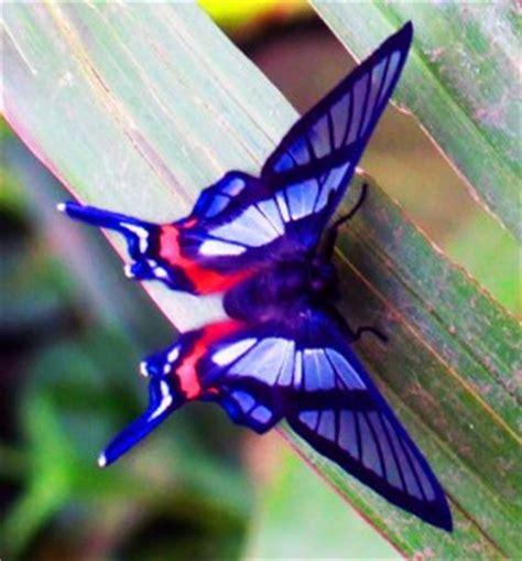 imagenes mariposas exoticas visitando machu picchu que hacer en aguas calientes