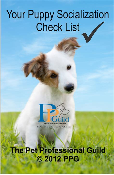 puppy and socialization the pet professional guild puppy education