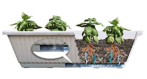 piante da orto in vaso l orto in vaso l autoproduzione sul balcone lezioni di