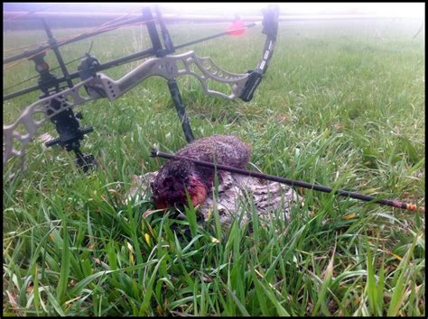 groundhogs with the bow