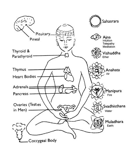 free endocrine unit coloring pages