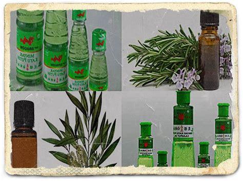 Pasaran Minyak Kayu Putih 10 manfaat minyak kayu putih untuk kesehatan dan