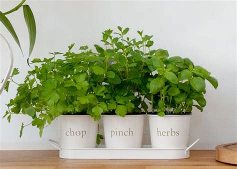 kitchen herb planter indoor herb planter eatwell101 herb planter for kitchen amazing kitchen herb pots