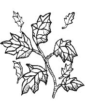 intricate fall coloring pages intricate fall coloring pages 52 free printable coloring