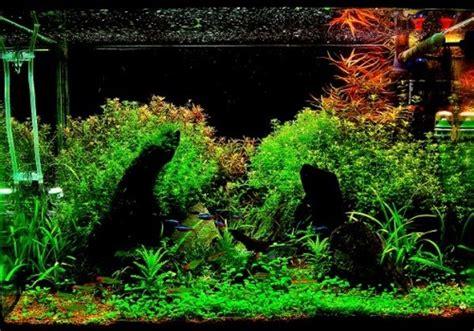 aquascape layout pdf aquarium quot my quot ar t chitectural design studio