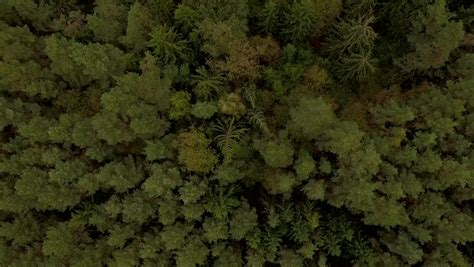 texture pattern forest 4k aerial view 226 flying over green forest wood stock
