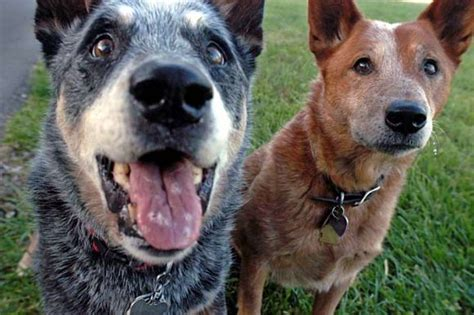 two dogs teaching two dogs in one home to just get along together sfgate