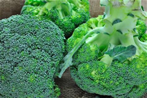 der garten mehrzahl brokkoli broccoli anbau und pflege