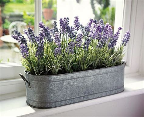 thegardeningclan want to plant lavender in the bedroom
