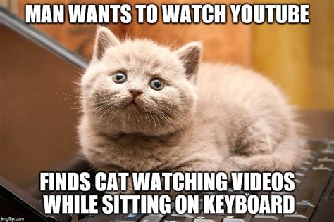 Cat Sitting Meme - youtube keyboard cat imgflip