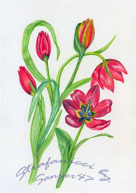 disegnare fiori disegnare fiori strafanicci marzo 2014 disegni da