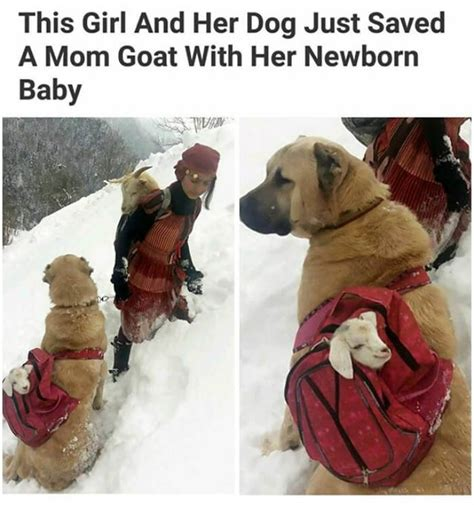Dog Mom Meme - 30 adorable dog memes that will make your day