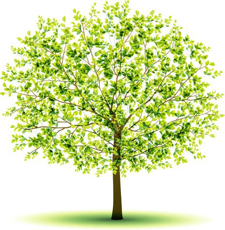 design graphics online for free creative green tree design vector graphics free vector in