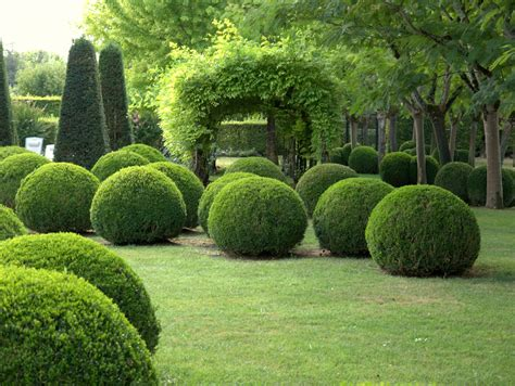 Topiary Gardens by Our Garden In The Beautiful Dordogne Box And Yew