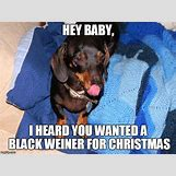 Funny Animal Workout Meme   666 x 500 jpeg 151kB