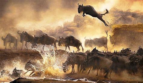 Masai Mara Game Reserve   Softkenya.com