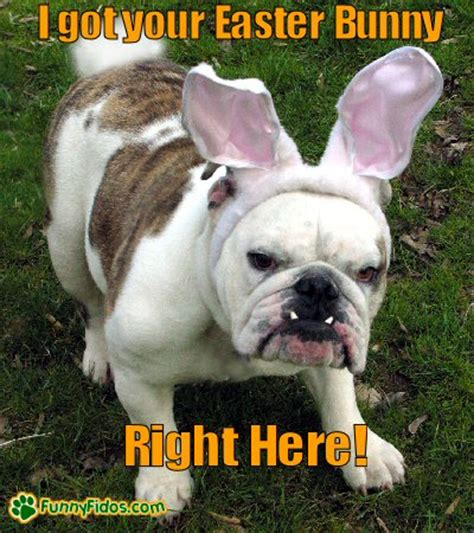 Witzige Osterhasen Bilder by 187 I Got Your Easter Bunny