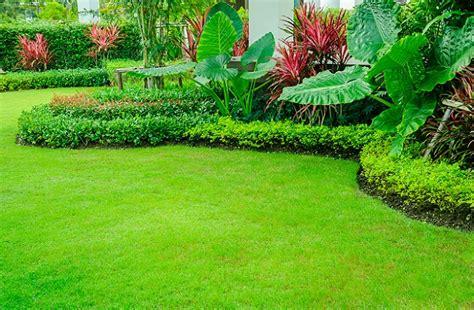 Der Perfekte Rasen by Der Perfekte Rasen M 228 Hen D 252 Ngen Vertikutieren