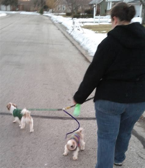 shih tzu and precious paws rescue of the day for 3 2 2012 bae blind shih tzu