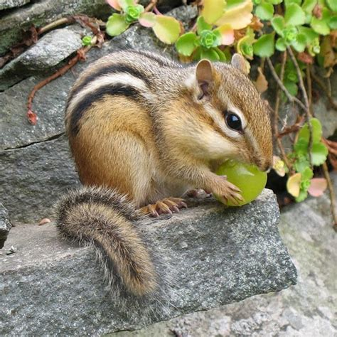 Bird And Squirrel Moon Stool White chipmunks animals facts pictures the wildlife