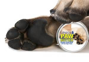 why do dogs paw you the blissful paw butter soothers protects paw pads