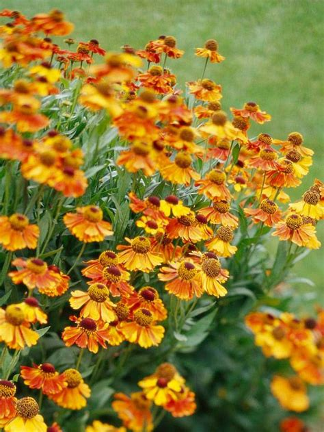 top fall flowers for your garden