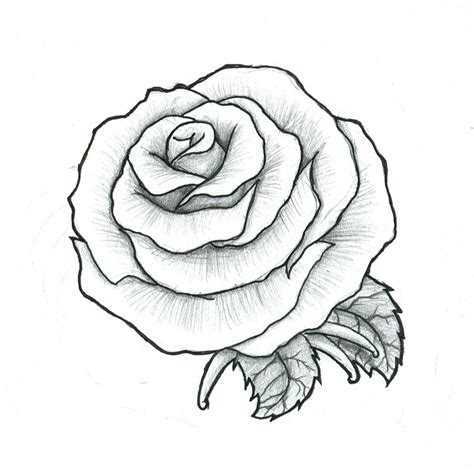 rose tattoo drawing maybe a by pulverisedfetus motifs