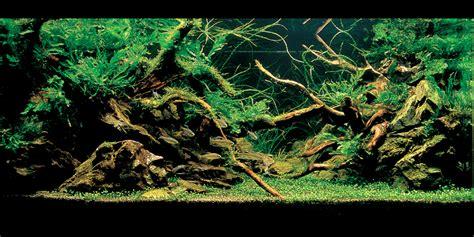 takashi amano aquascape meer diepte in je aquarium hier 6 geheimpjes voor je