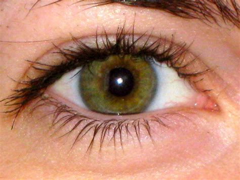 N 8 Hazel hazel green eye color www imgkid the image kid has it