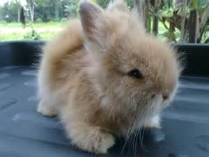 Rabbit junction rabbit bunnies amp me for adoption