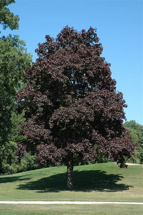King House Maple Shade by 158 Best Landscaping Images On Gardening Home