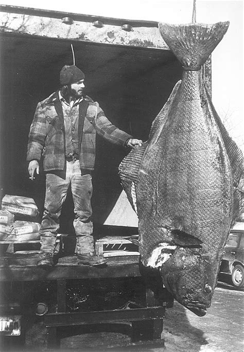 Down East fishermen object to proposed limits on halibut