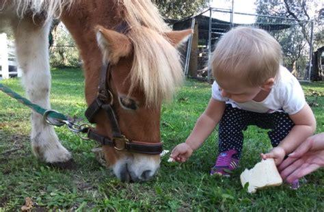 quali sono gli animali da cortile a viterbo una fattoria per crescere e imparare giocando