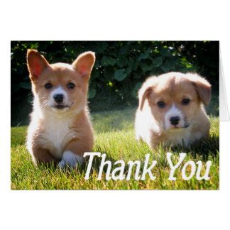 thank you puppy thank you cards zazzle
