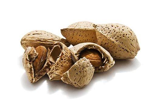 Minyak Almond Malaysia pokok badam