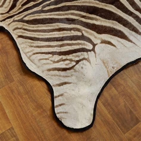 Zebra Rug For Sale by Zebra Size Rug For Sale 17870 The