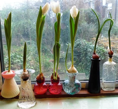 Putting Tulips In A Vase by Amaryllis Garden Withindoors