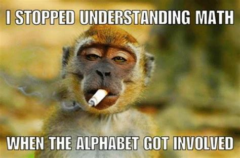 Baby Monkey Meme - 8 baby monkey memes to make you awww