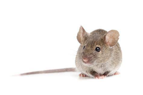 Topi Trucker Tntt I School rodent pest griffin pest