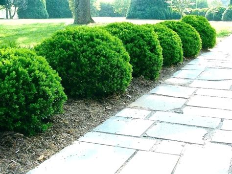 landscaping plants for zone 6 onlinemarketing24 club