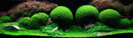 the underwater of competitive aquascaping