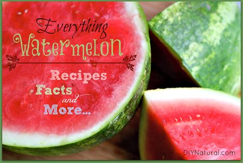 watermelon recipe watermelon recipes facts and everything else you need to