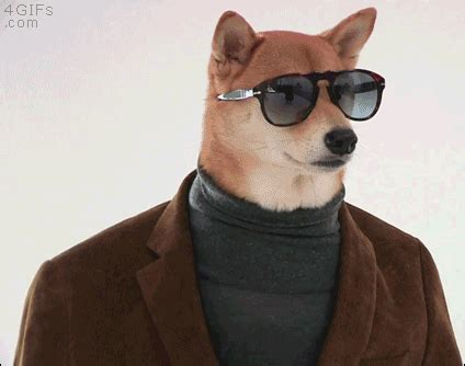 cool puppy gif find on giphy