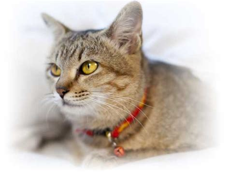 and cat pictures cat insurance kitten insurance healthy paws 174 best in 2015 and 2016