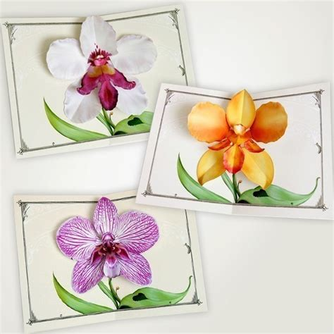 paper cutting card orchid template crankbunny animation paper engineering illustration
